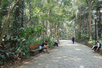 parque_trianon_sao_paulo_brazil